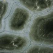 Granit turtle green fonce
